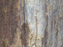Extrahieren Sie das alte Holz in der natürlichen, nahen hohen Oberfläche und in der Beschaffenheit des Holzes Lizenzfreie Stockbilder