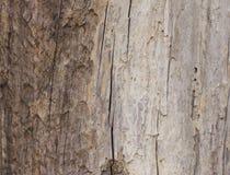 Extrahieren Sie das alte Holz in der natürlichen, nahen hohen Oberfläche und in der Beschaffenheit des Holzes Stockbilder
