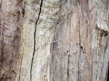 Extrahieren Sie das alte Holz in der natürlichen, nahen hohen Oberfläche und in der Beschaffenheit des Holzes Lizenzfreies Stockbild