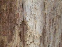 Extrahieren Sie das alte Holz in der natürlichen, nahen hohen Oberfläche und in der Beschaffenheit des Holzes Lizenzfreie Stockfotos