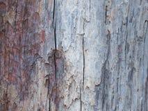 Extrahieren Sie das alte Holz in der natürlichen, nahen hohen Oberfläche und in der Beschaffenheit des Holzes Stockfotografie