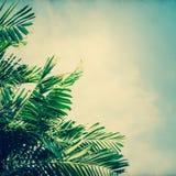 Extrahieren Sie unscharfe Beschaffenheit des Papiers mit Kokosnussbaum und blauem Himmel Stockfotografie