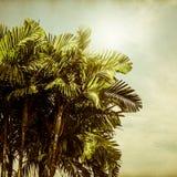 Extrahieren Sie unscharfe Beschaffenheit des Papiers mit Palme und blauem Himmel Stockbilder