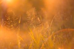 Extrahieren Sie unscharfen Florahintergrund mit Herbstgras im Sonnenlicht im Sonnenuntergang Stockbilder