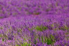 Extrahieren Sie unscharfen Hintergrund von blühenden purpurroten Lavendel-Blumen Lizenzfreie Stockbilder