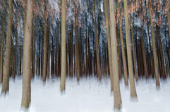 Extrahieren Sie Wald im Winter Lizenzfreies Stockfoto