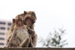 Extrahiert Tieraffegefühlsliebe mit ihrer Familie Stockfotografie