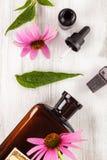 Extrait de fleur d'Echinacea photos stock