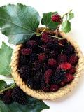 Extrakt för mullbärsträdfruktblad Arkivfoton