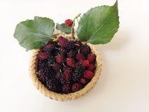 Extrakt för mullbärsträdfruktblad Arkivbild