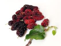 Extrakt för mullbärsträdfruktblad Arkivfoto