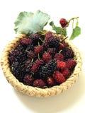 Extrakt för mullbärsträdfruktblad i korg Arkivfoto