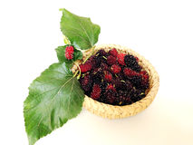 Extrakt för mullbärsträdfruktblad i korg Royaltyfri Bild