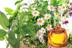 Extrakt med läkarundersökningväxter och nya örter Fotografering för Bildbyråer