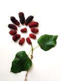 Extrakt mullbärsträdfrukt i formen av blomman Royaltyfri Bild