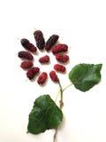 Extrakt mullbärsträdfruktblad i formen av blomman Arkivfoto