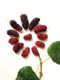 Extrakt mullbärsträdfruktblad i formen av blomman Royaltyfri Fotografi