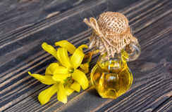 Extrakt och blomma av forsythia Fotografering för Bildbyråer