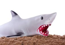 An extramarital grey shark Royalty Free Stock Images