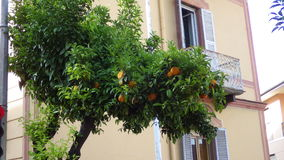 Extraordinary appearance of streets. Tangerines grow just in streets Royalty Free Stock Images