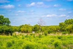 A beautiful lake park in Tishomingo National Wildlife Refuge, Oklahoma