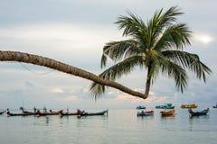 The Extraordinary Coconut Tree at Ko Tao - Chumphon, Thailand. The Extraordinary Coconut Tree at Ko Tao with fishing boat - Chumphon, Thailand stock photo