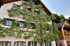 Extraordinary house in Hallstatt, Austria. Three spreading on the facade of cosy alpine cottage stock images