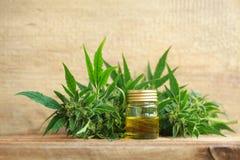 Extrato do óleo do cannabis e planta médicos do cânhamo imagem de stock