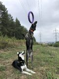 Extrator do cão foto de stock royalty free