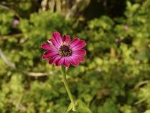 Extravagance rouge de ressort de fleur belle heureuse photos stock