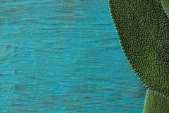 Extreem close-up van kruid stock afbeeldingen