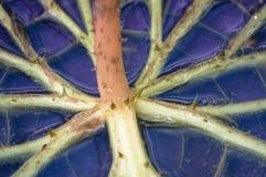 Extreem close-up van waterplant met doornen royalty-vrije stock foto's