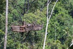 Extreem recreatiegebied op een hoge tropische boom in de wildernis dichtbij de rijstterrassen in eiland Bali, Indonesië stock foto's