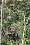 Extreem recreatiegebied op een hoge tropische boom in de wildernis dichtbij de rijstterrassen in eiland Bali, Indonesië stock afbeeldingen
