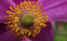 Extrem closeup av blomman Arkivbild