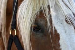 Extrem closeup av hästen arkivfoto