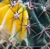 Extrem closeup av kaktusgrova spikar Royaltyfria Bilder