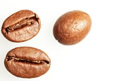 Kaffebönamakro Arkivbild