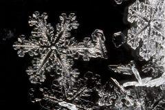 Extrem nah oben von der Schnee-Flocke Stockbilder