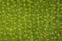 Extrem powiekszanie - Stomatas w zielonym liściu przy 20x Obraz Stock