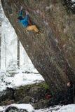 Extrem vintersport Vagga klättraren som stiger en utmanande klippa Extrem sportklättring Frihet risk, utmaning, framgång fotografering för bildbyråer
