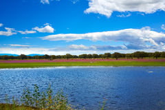 Extremadura dehesa grasslands lake in Spain Royalty Free Stock Photos