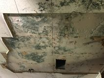 Extreme ceiling mold growth after rain during hurricane harvey. Extreme mold growth on ceiling after rain and damage during hurricane harvey royalty free stock photo
