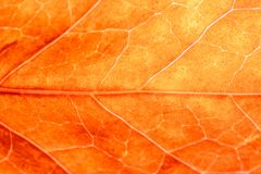 Extreme close up background texture. royalty free stock image