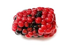 Extreme close up of berry isolated on white Stock Images