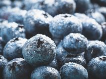Extreme close up Blueberries. Extreme close up view of blueberries. Selective focus. Copy space. Bilberry on wooden Background. Blueberry antioxidant. Concept Stock Photography
