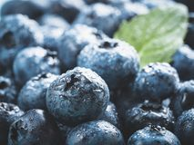 Extreme close up Blueberries. Extreme close up view of blueberries. Selective focus. Copy space. Bilberry on wooden Background. Blueberry antioxidant. Concept Royalty Free Stock Photography