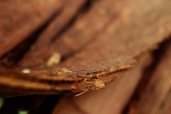 Extreme close up of broken tree bark Royalty Free Stock Photography