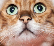 Extreme close up of cat's nose and mouth Stock Image
