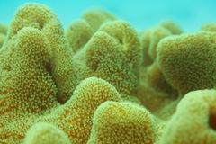 Extreme close-up of coral Royalty Free Stock Images